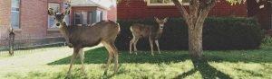 Blog-Post-Featured-Image-Warranty-Deer-1280×375-1