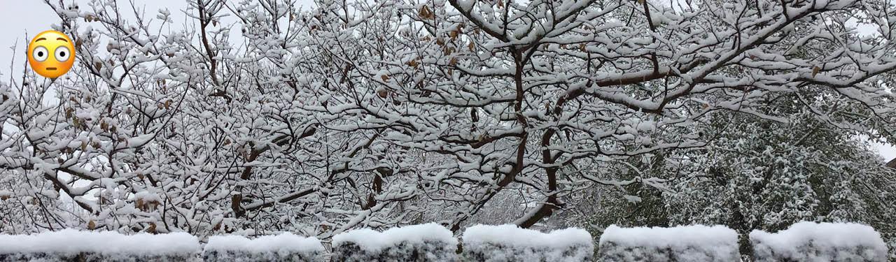 winter freeze