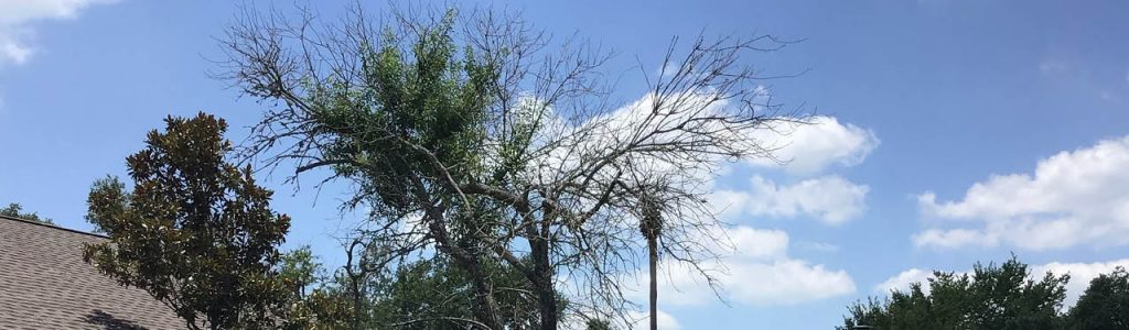 best tree services
