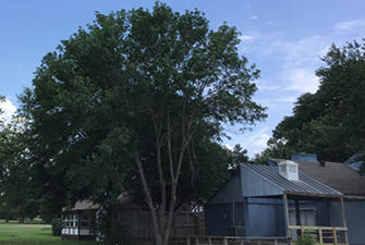 trees and homes affect each other