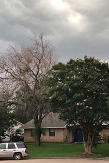 dead tree vs living tree